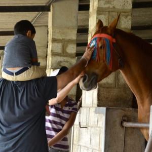 EmbassyRiding School-HorseStable