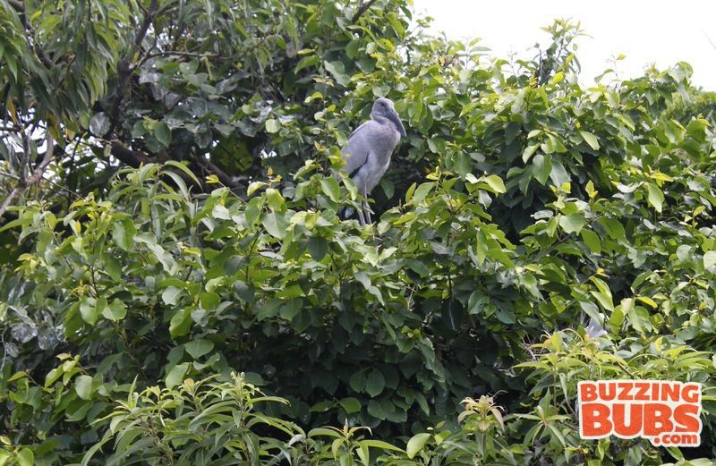 Ranganthitu-BirdWatch