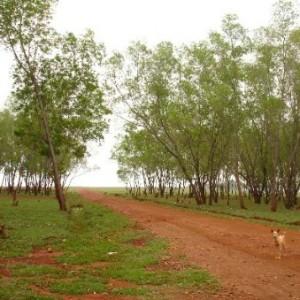 Our Native Village, Bangalore, grasslands
