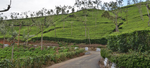ooty-cover-photo