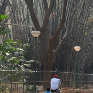 Cubbon_park_cycle_4