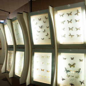Bannerghatta National Park - Butterfly Park - Butterfly Conservatory -butterfly display