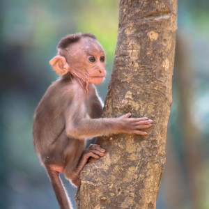 Bannerghatta National Park - monkey