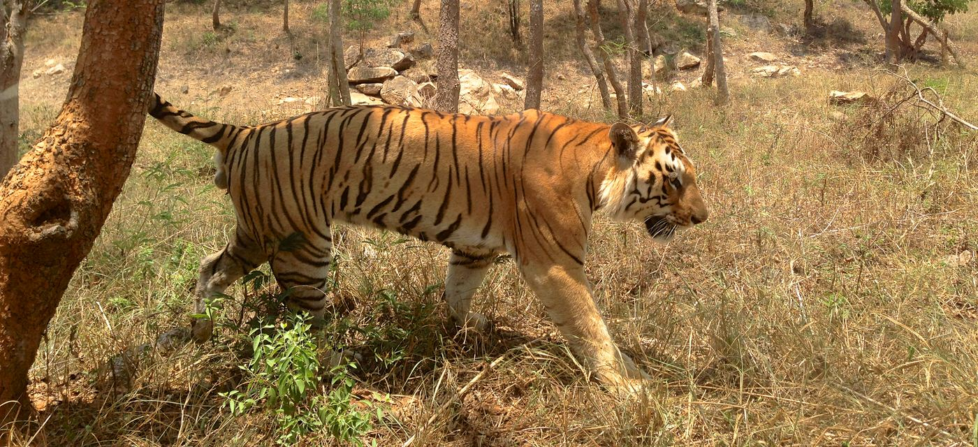 Day trip to The Bannerghatta National Park Cover Image