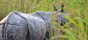 Kaziranga_featured_image-1