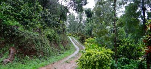 Getaway to Coorg, Weekend getaways from Bangalore