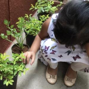 Indiranagar_nursery_03