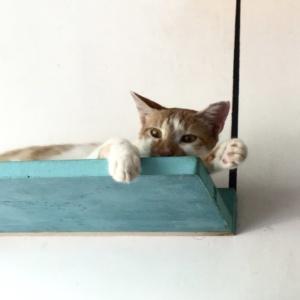 Indiranagar_the_cat_studio_02