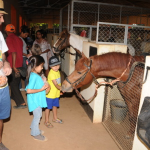 Saddle Management at Embassy International Riding School