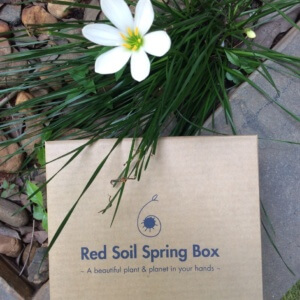 Red Soil Spring Box