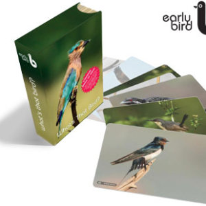 Early Bird Flash Cards