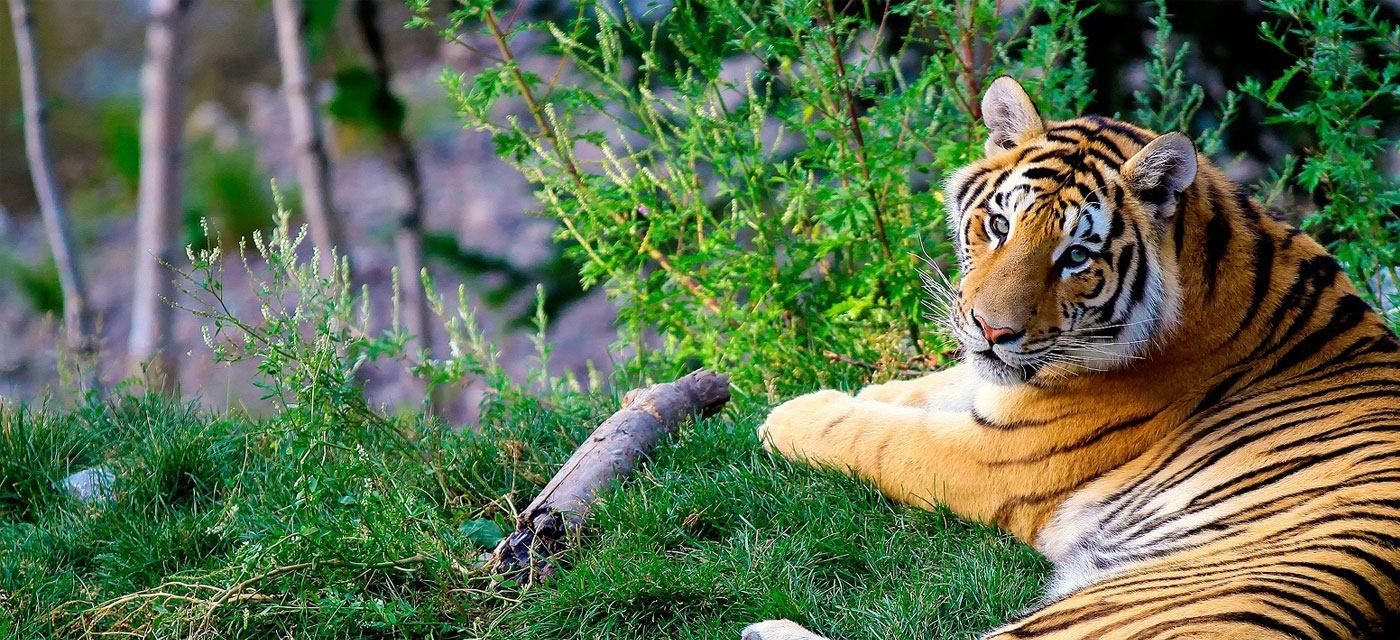 5 Reasons why jungle safaris are better than zoos Cover Image
