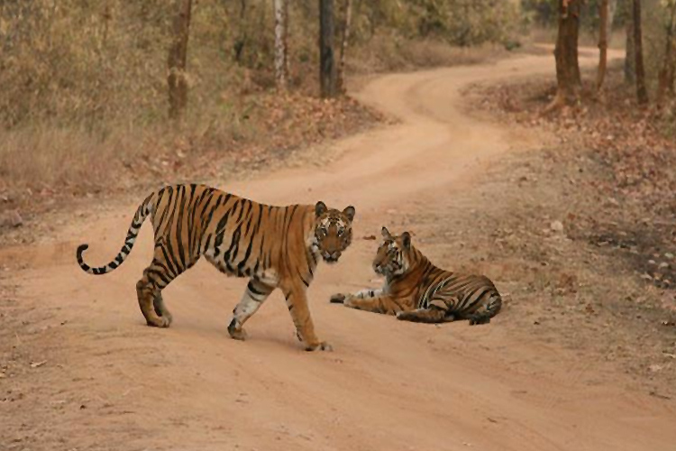 Tiger spotting at Bandhavgarh