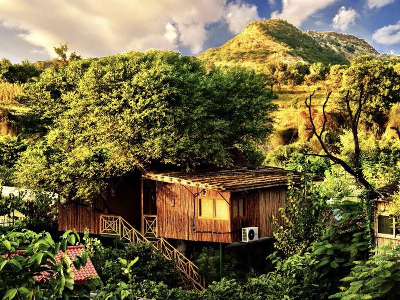 tree_house_tree_house_resort