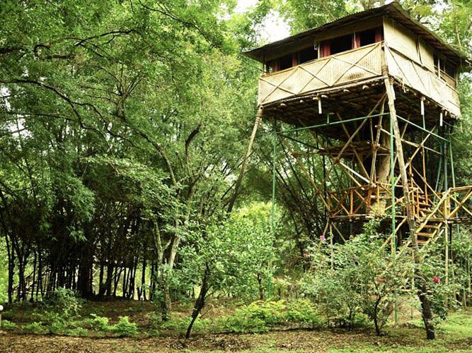 tree_house_safari_land_resorts