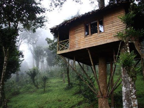 tree_house_nature_zone_resorts