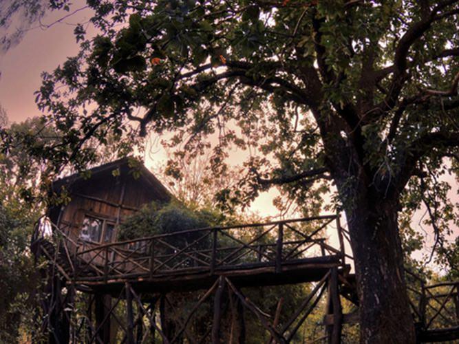 tree_house_tree_house_hideaway