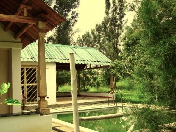 resort_mangomist