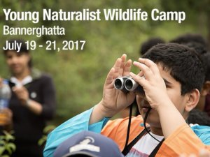 Young Naturalist Wildlife Camp