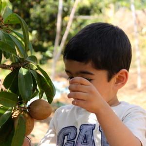 Silver Oak Farm, Nandi Hills, plucking fruits