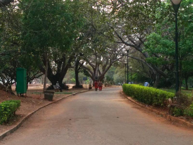 lalbagh botanical garden, paths