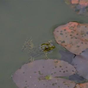 Our Native Village, Bangalore, pond