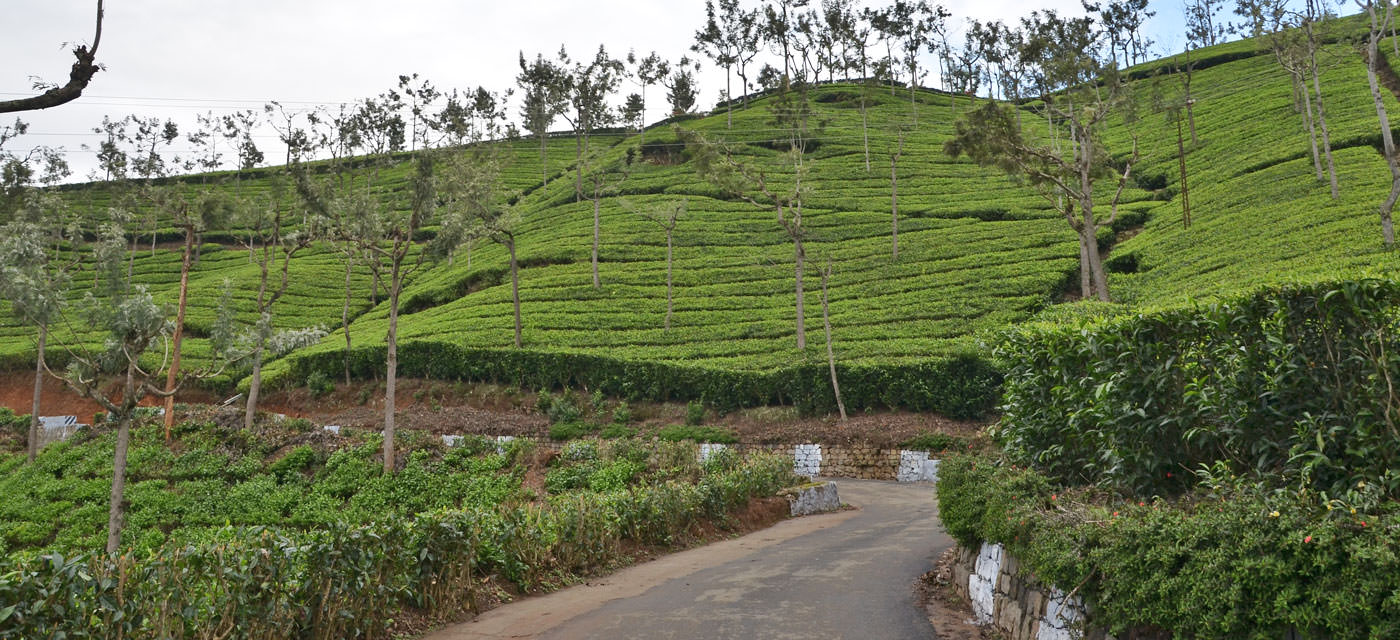 A family holiday in Ooty Cover Image