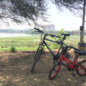 Agara_cycle_2