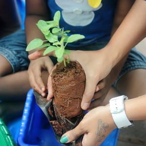 Planting at Little Green Horns