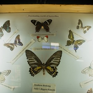 Bannerghatta National Park - Butterfly Park - Butterfly Conservatory - museum