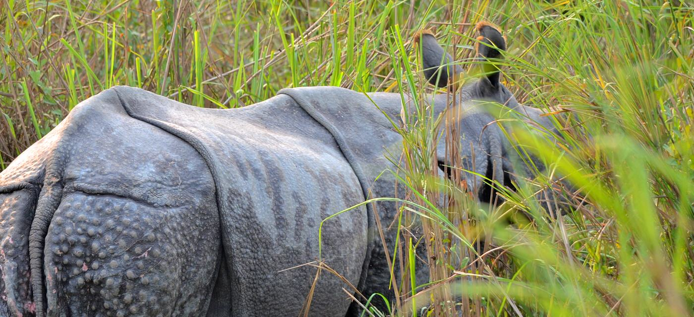 The Kaziranga Experience: Must-see for Kids and Adults Cover Image