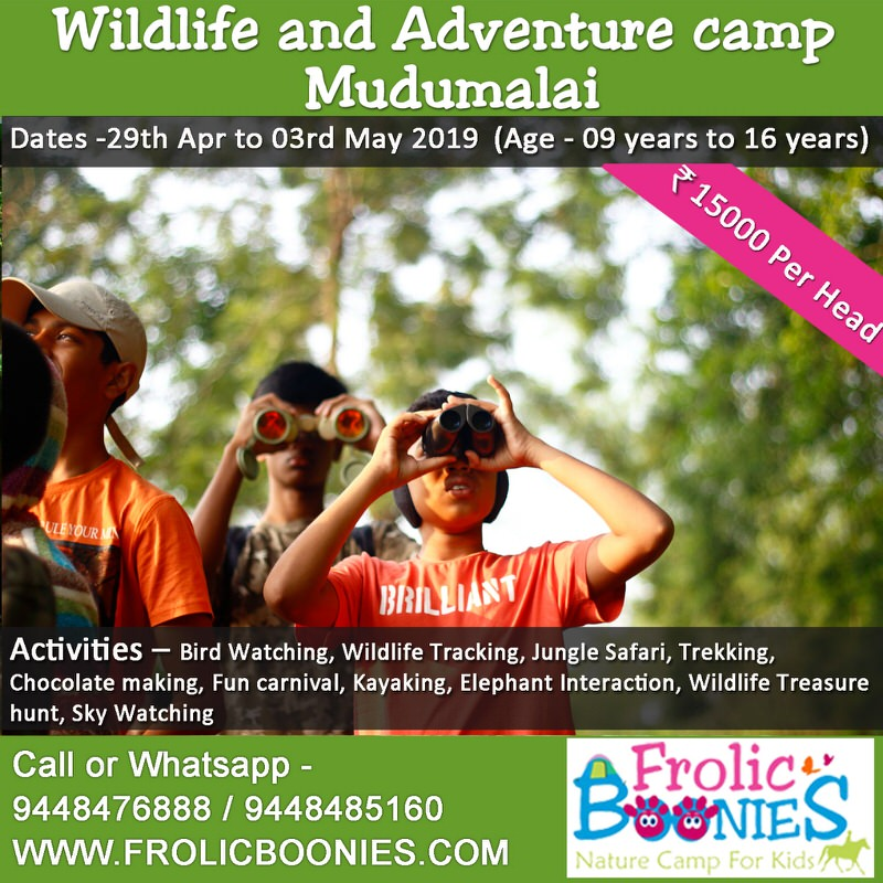 Bandipur Mudumalai Wildlife Camp 2019 Cover Image