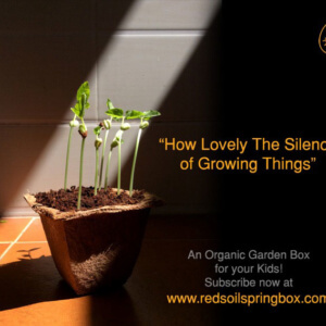 Red Soil Spring Box, DIY Gardening Box