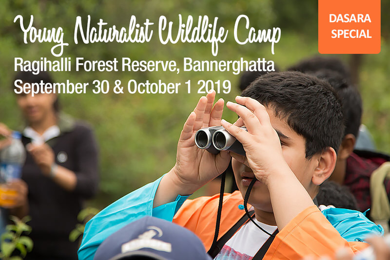 Young Naturalist Wildlife Camp Cover Image