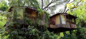 Tree House Resorts
