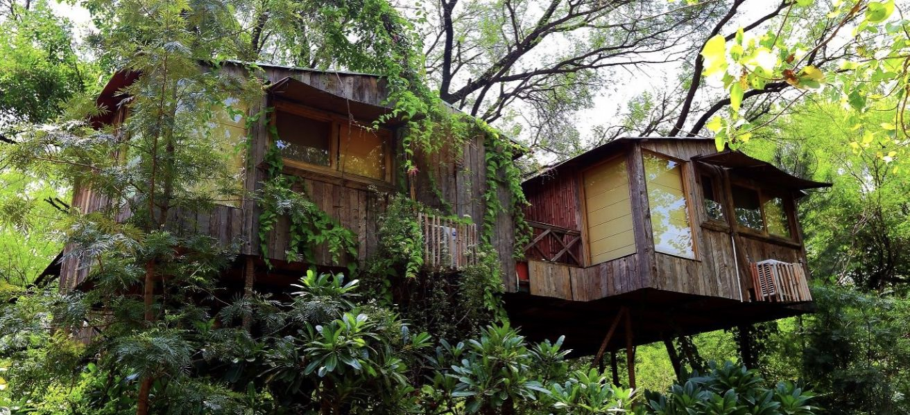 Live The High Life: Tree House Resorts Around The Country For Every Budget Cover Image