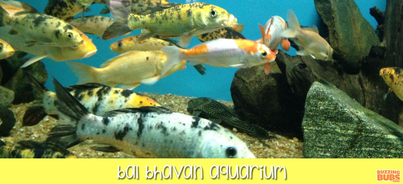 bb_central_bal_bhavan_aquarium