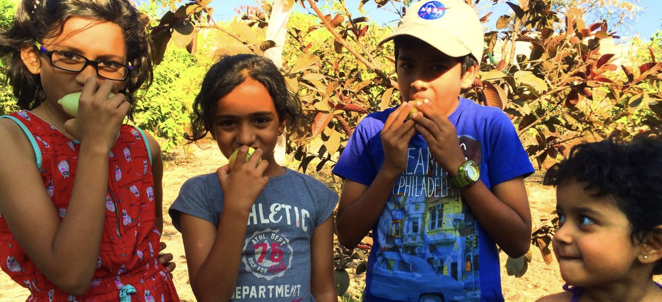 5 Local fruit picking farms your kids will enjoy Cover Image