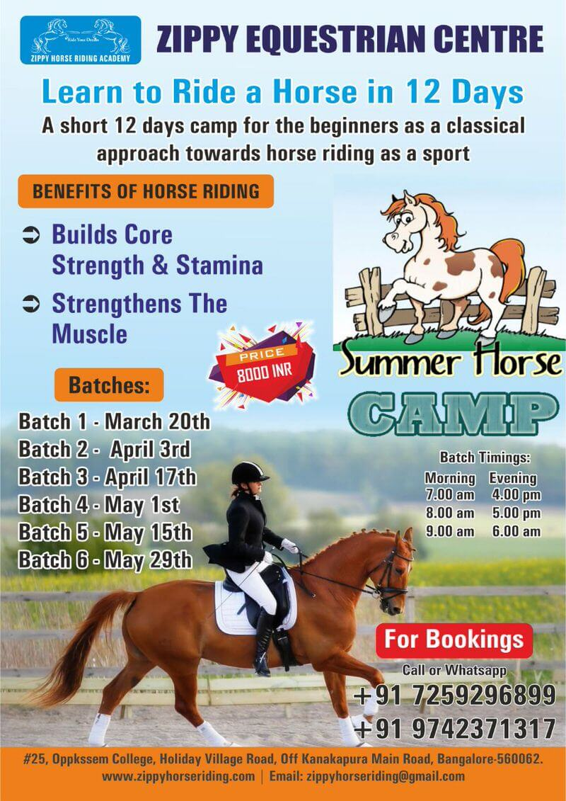 Zippy Horse Riding Academy Summer Camp Cover Image