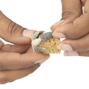 Step3: Paste along cone shaped seashells