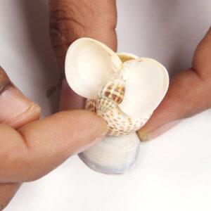 glue a small cone-shaped shell