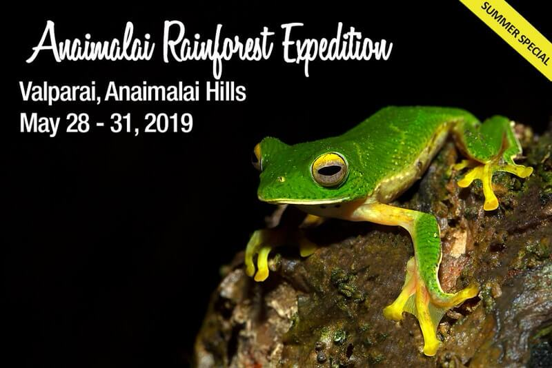 Anaimalais Rainforest Expedition 2019 – Valparai Cover Image