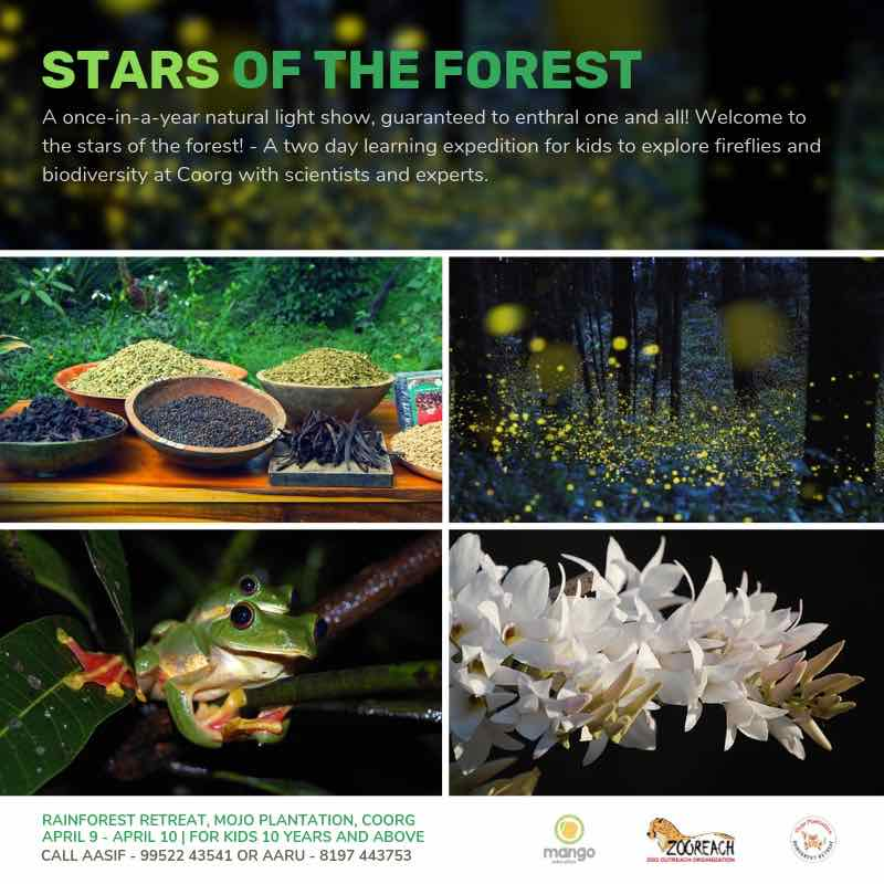 Stars of the Forest Summer Camp Cover Image