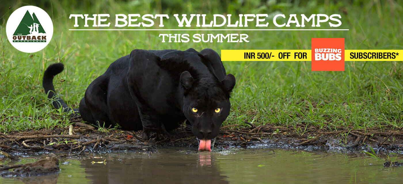 Young Naturalist Wildlife Camp: Summer camp for young shutterbugs in the wild outdoors Cover Image