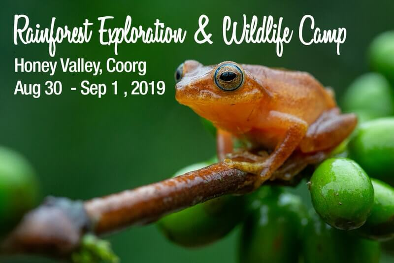 Rainforest Exploration & Wildlife Camp Cover Image