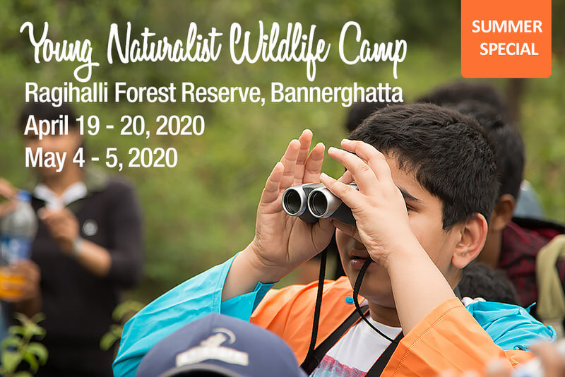Young Naturalist Wildlife Camp 2020 Cover Image