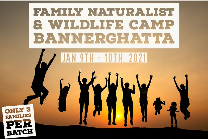 Family Naturalist & Wildlife Camp Cover Image