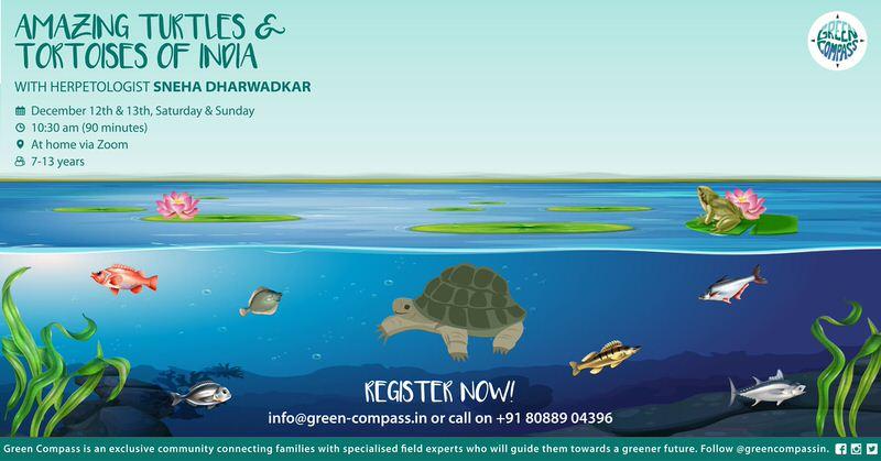 Amazing Turtles & Tortoises of India with Sneha Dharwadkar Cover Image